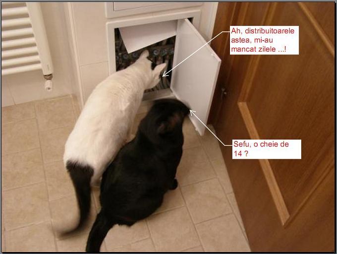 cats-service-team.jpg